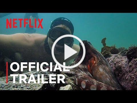 My Octopus Teacher   Official Trailer   Netflix