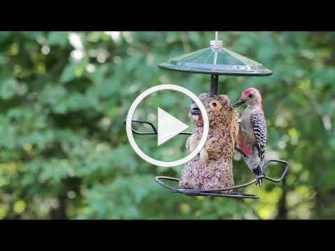 WBU Nature Centered | Relax & Enjoy the Birds | Woodpeckers