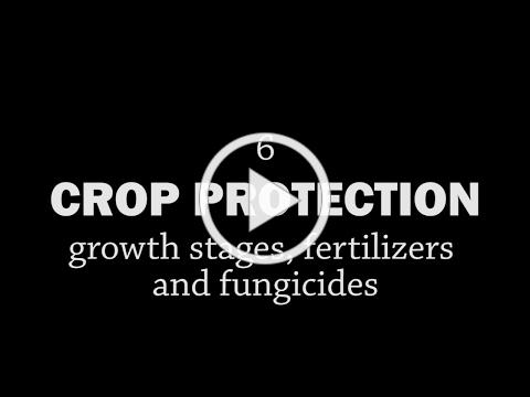 Rotationally Raised - Crop Protection: Growth Stages, Fertilizers and Fungicides
