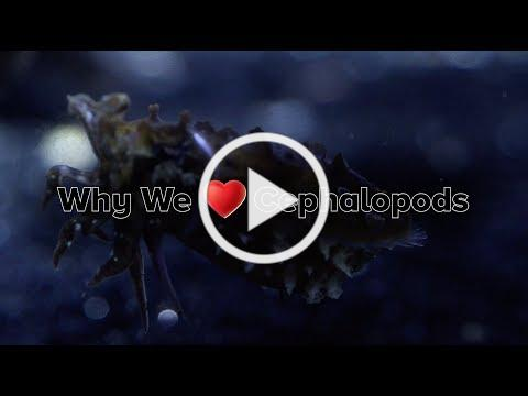 Why We Love Cephalopods