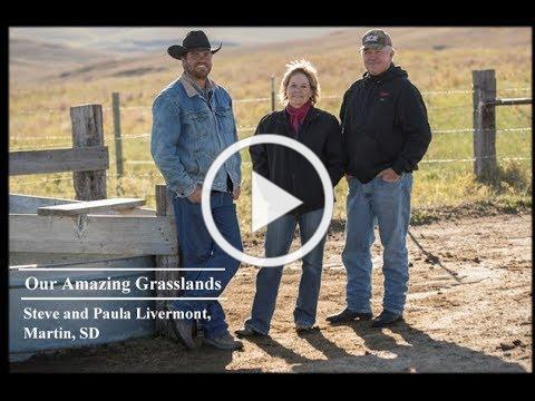 Our Amazing Grasslands ~ Livermont Ranch