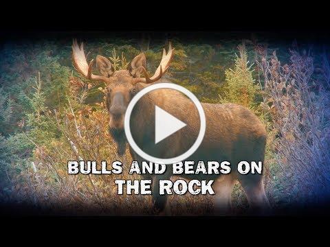 Bulls and Bears on The Rock (TEASER)