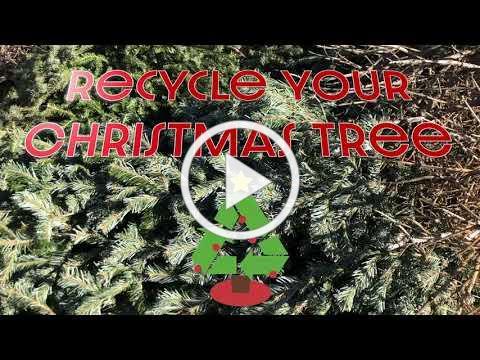 Golden Xmas Tree Recycle 2021