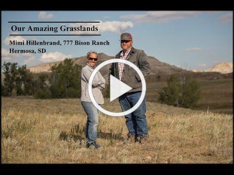 Our Amazing Grasslands ~ 777 Bison Ranch, Mimi Hillenbrand