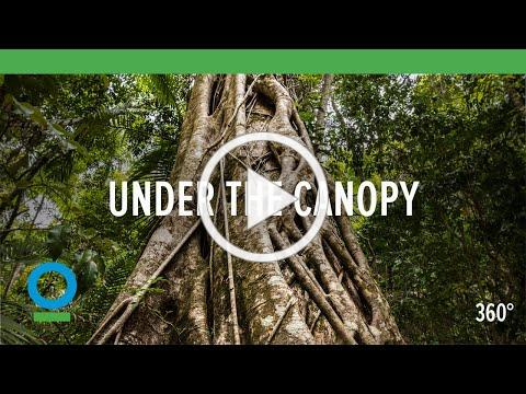 Under The Canopy (360 video) | Conservation International (CI)