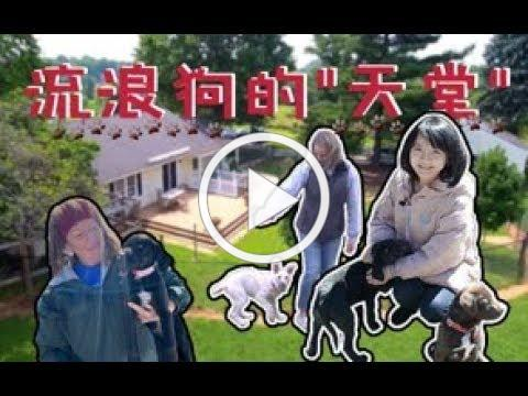 Follow the luckiest homeless dogs to find new homes 美国流浪狗的天堂