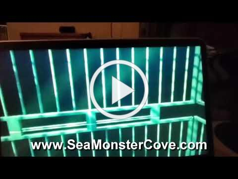 Cove Dweller Video 1