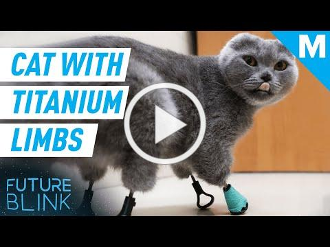 This Cat Has 3D-PRINTED TITANIUM LIMBS | Future Blink