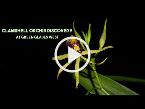 RARE and ENDANGERED ORCHID DISCOVERY in the SWAMPS
