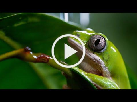 A Perfect Planet: Extended Trailer | New David Attenborough Series | BBC Earth