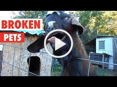 Weirdo Pets | I Think Your Pet Is Broken...
