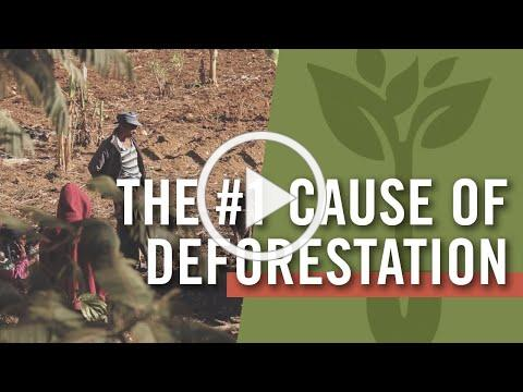 Meet the world's leading cause of deforestation