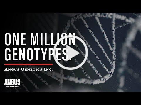ONE MILLION GENOTYPES - Angus Genetic Evaluation Historic Milestone - AGI PRESIDENT, Kelli Retallick