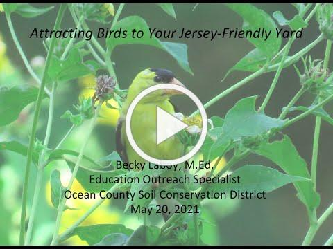 Attracting Birds to your Jersey-Friendly Yard