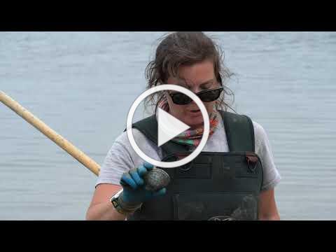 Learn to Shellfish | Ep. 3 Quahogs Scratching Land & Water