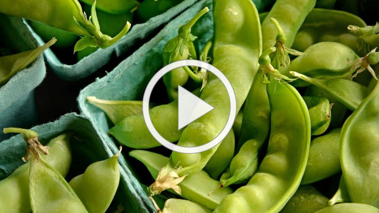 Homegrown | Growing Spring Snow Peas and Sugar Snaps