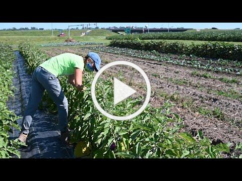 Vegetable Farmers After the Derecho - Donna Warhover