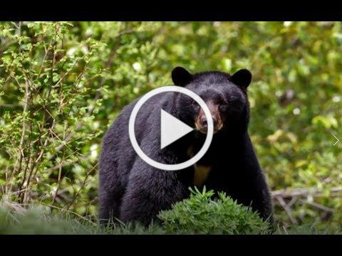 What You Need to Know About Bear Management