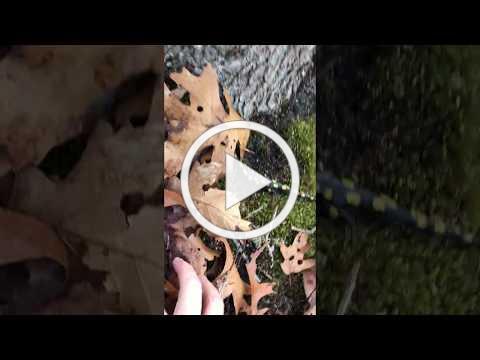 A Salamander's Meander - Back Home