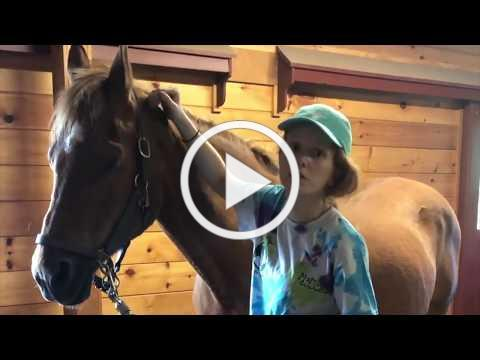 Grooming the Whole Horse - Part 1