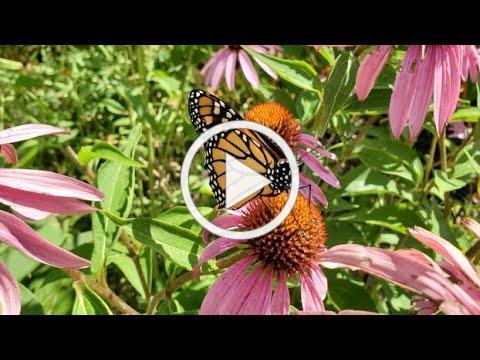 Pollinators & Climate Change: Making an Impact on the Farm - Farminar