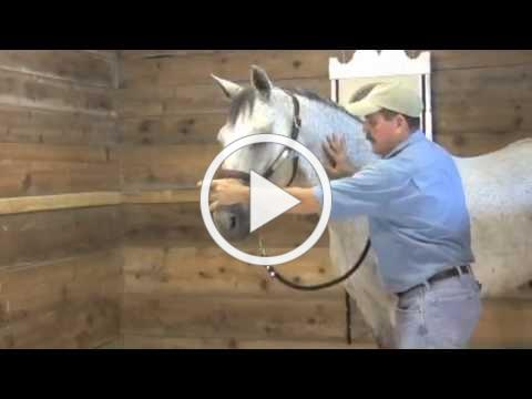 Horse Massage: Help Your Horse using the Masterson Method®