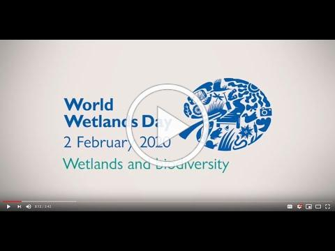 Wetland biodiversity matters for life to thrive