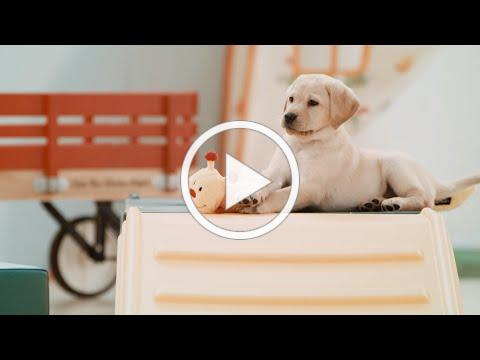 One Lucky Puppy | Southeastern Guide Dogs Sponsor a Puppy Commercial