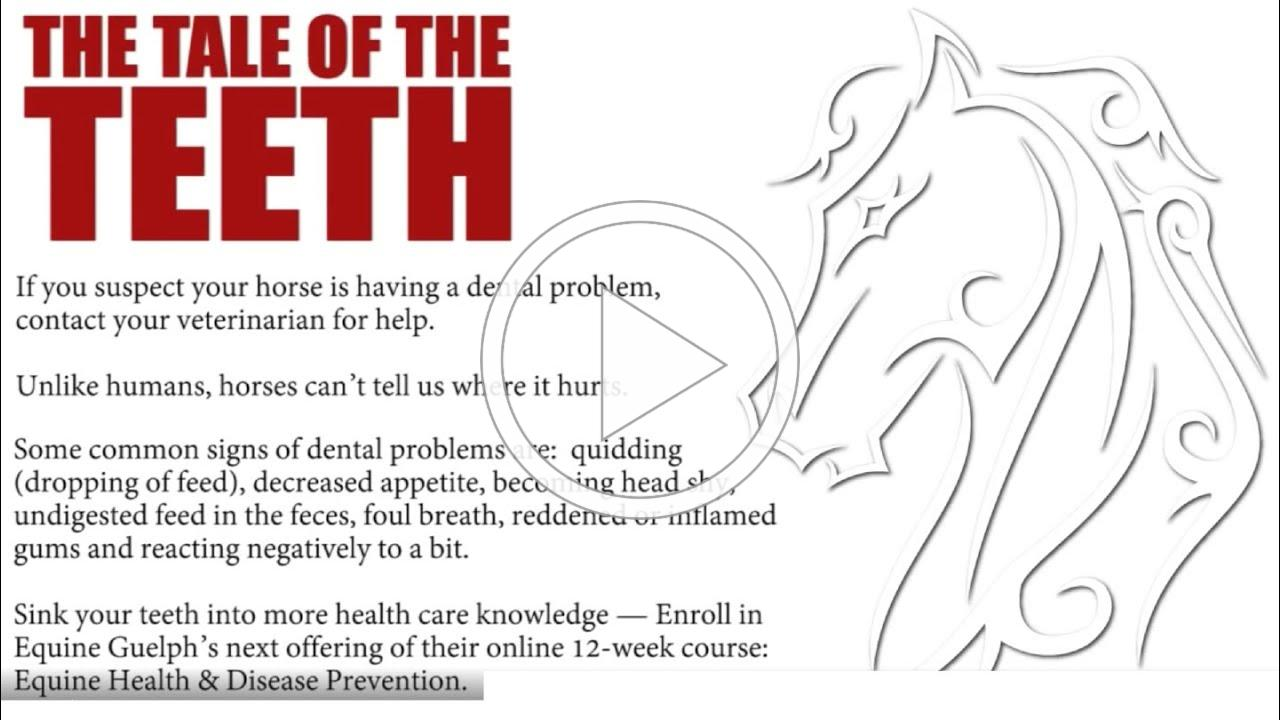 The Tale of the Teeth - Equine Dental