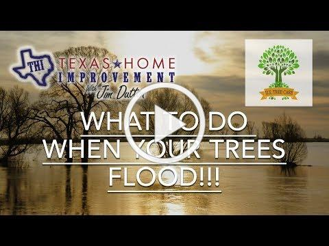 What To Do When Your Trees Flood - Matt Latham