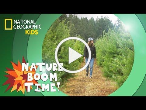 Christmas Tree Farm 🎄 | Nature Boom Time