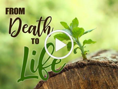 """""""From Death to Life"""""""