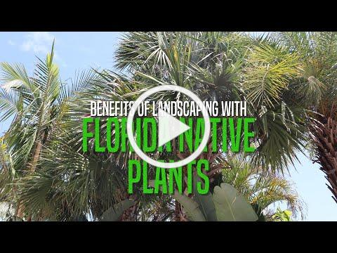 Benefits of Landscaping with Florida Native Plants