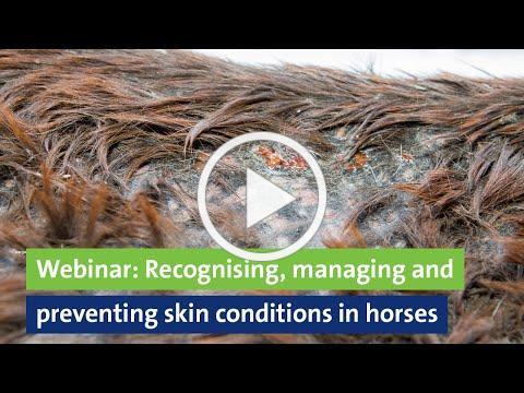 Webinar: Recognising, managing and preventing skin conditions in horses, Professor Derek Knottenbelt