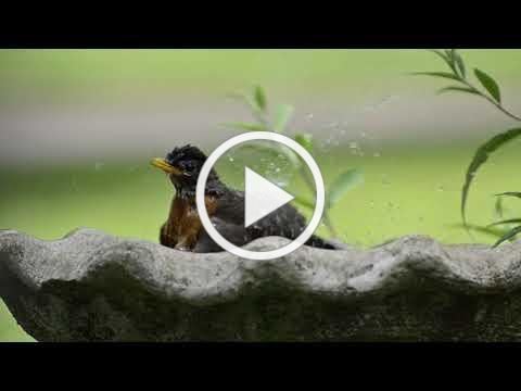 Wild Birds Unlimited - Water Commercial - 30 Seconds