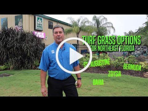 Turf Grass Options for Northeast Florida