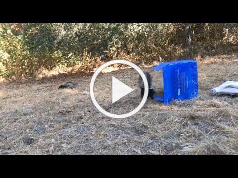 Skunk Release - Facebook Live Stream