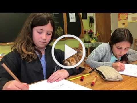 2018 4th Grade Chicken Journal