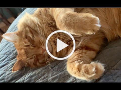 Sleepy Nigel - Music by Lisa Lynne