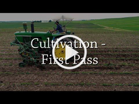 Cultivation - First Pass - Organic Weed Control