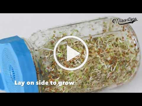 How To Grow Bean Sprouts in Mason Jars with Bean Screens by Masontops