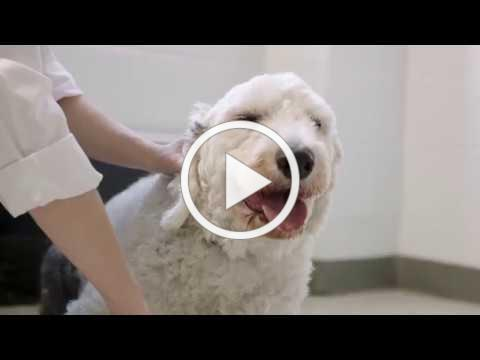 TIAA 100th Anniversary Difference Makers: Veterinarian Helping Dogs | TIAA