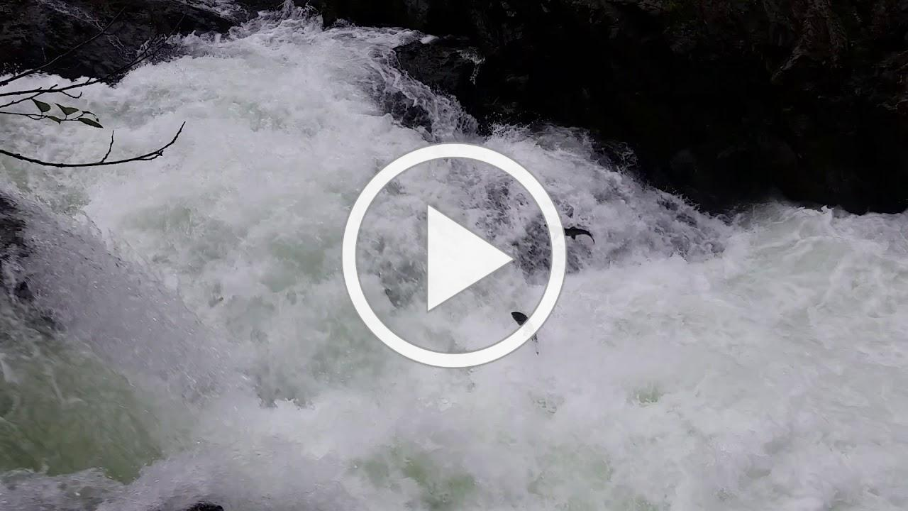 Olympic National Park Kaiyote Tours Salmon Cascades Waterfalls