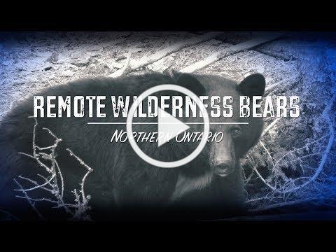 Remote Wilderness Bears (Teaser)