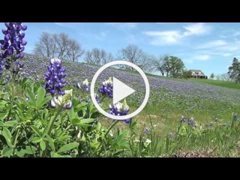 Ennis Texas beauty shots and bluebonnet trail
