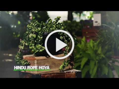 Moana Nursery Indoor Plant Greenhouses