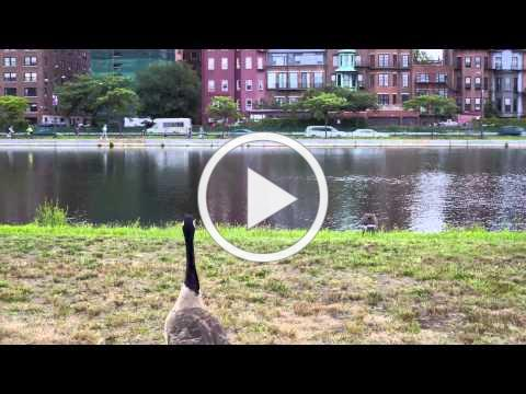 """""""Growth in Wood, Time in Stone, Nature in a City"""" Time Lapse of Boston Parks"""