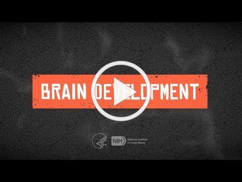 Teen Brain Development