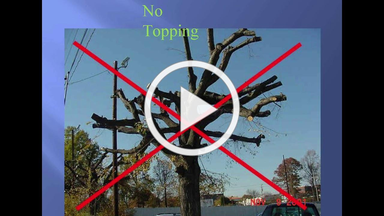 How to Prune Deciduous Trees