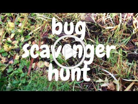 Bug Scavenger Hunt